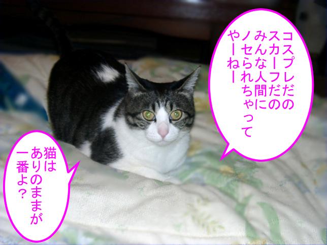 ミーちゃん(親猫)