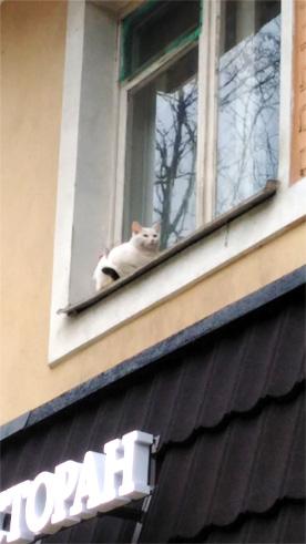 ロシアの猫2