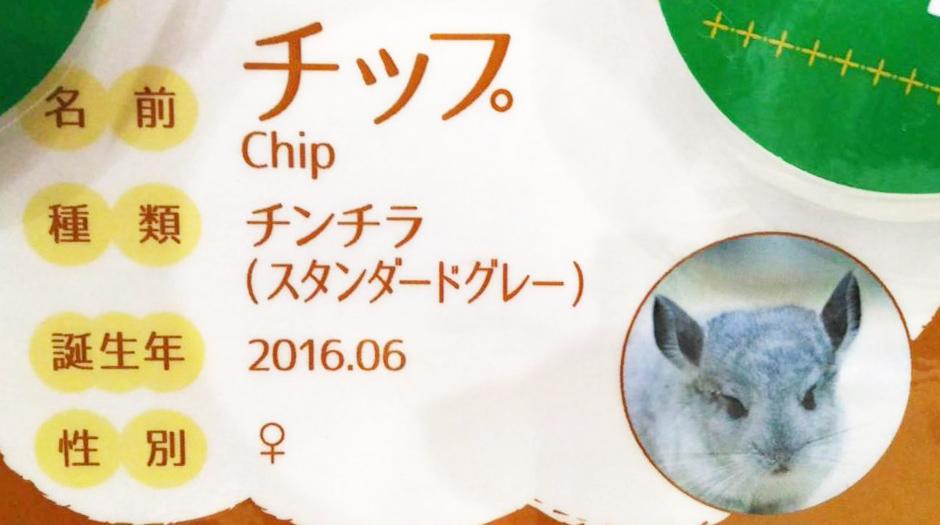 チンチラ紹介カード