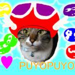 赤ぷよ帽子を被った大福丸