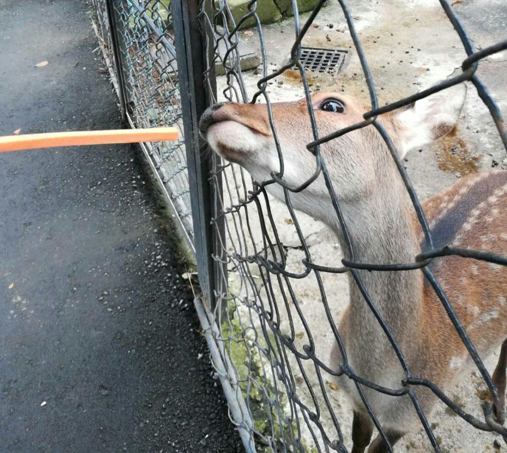 餌がねだる鹿2