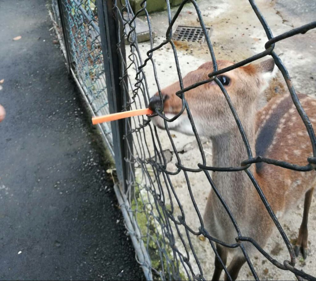 餌を食べる鹿