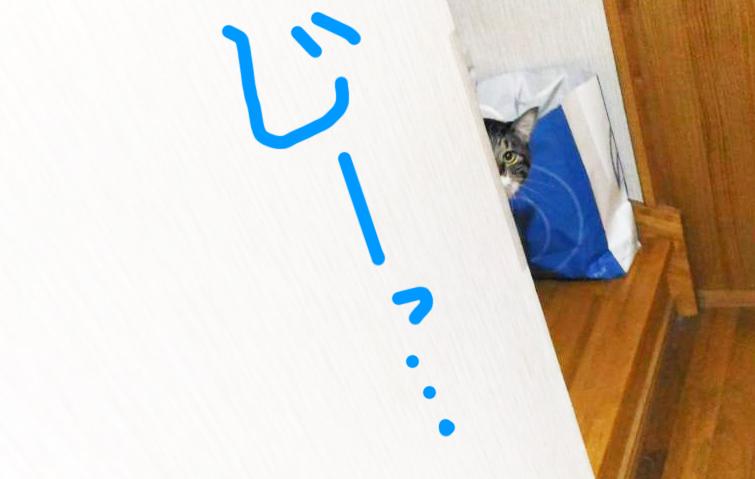 階段の上で様子伺いをする大福丸
