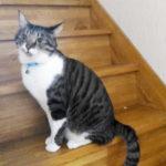 階段の上でおすましポーズの大福丸