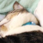 幸せそうな寝顔