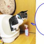 トイレ中の大福丸