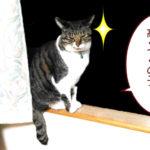 大福丸「俺様の肖像権は高くつくニャ」