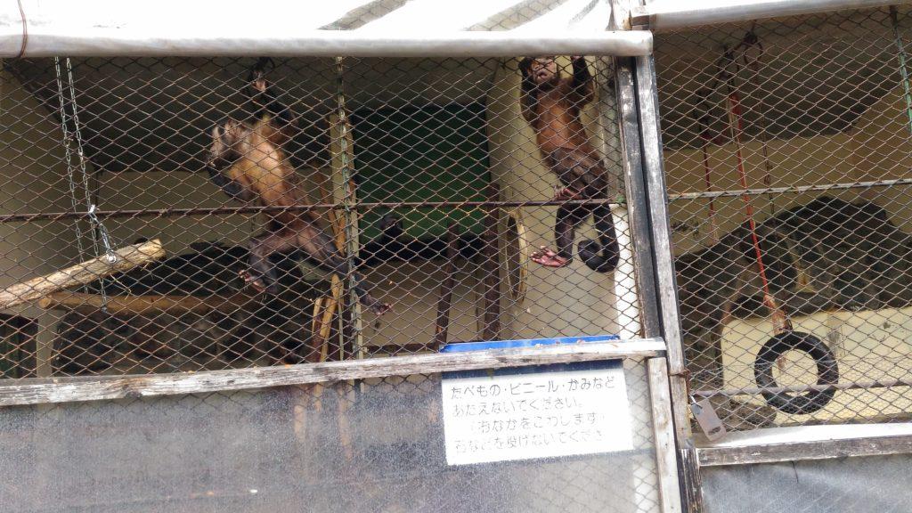 お猿さん達2
