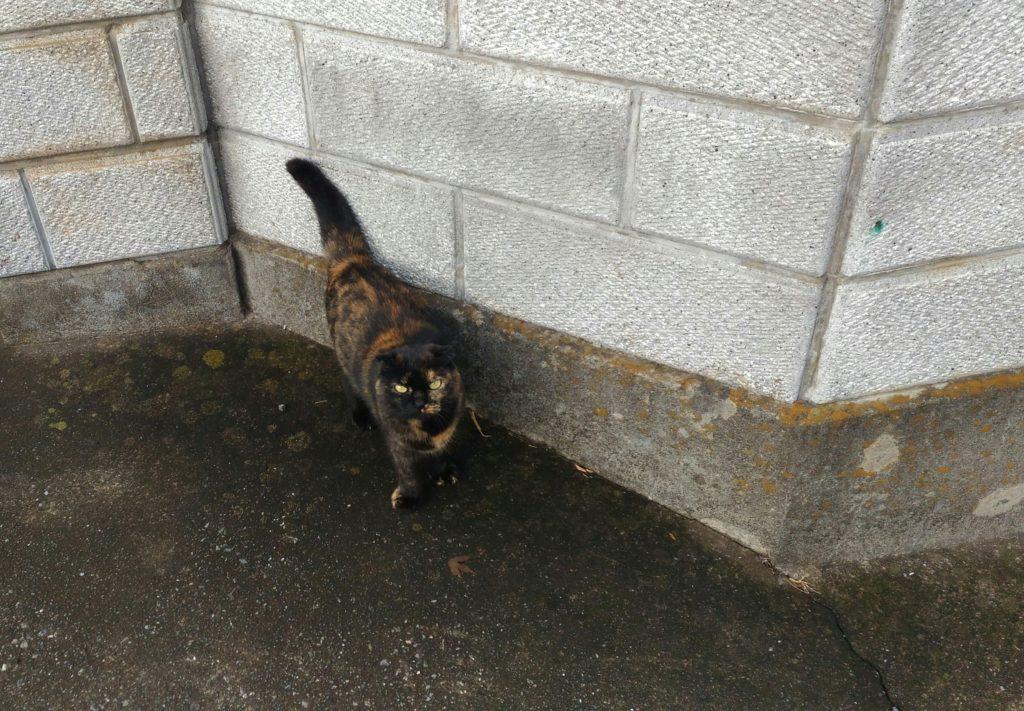 近所の猫3