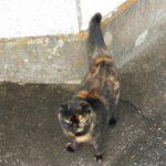 近所の猫アップ