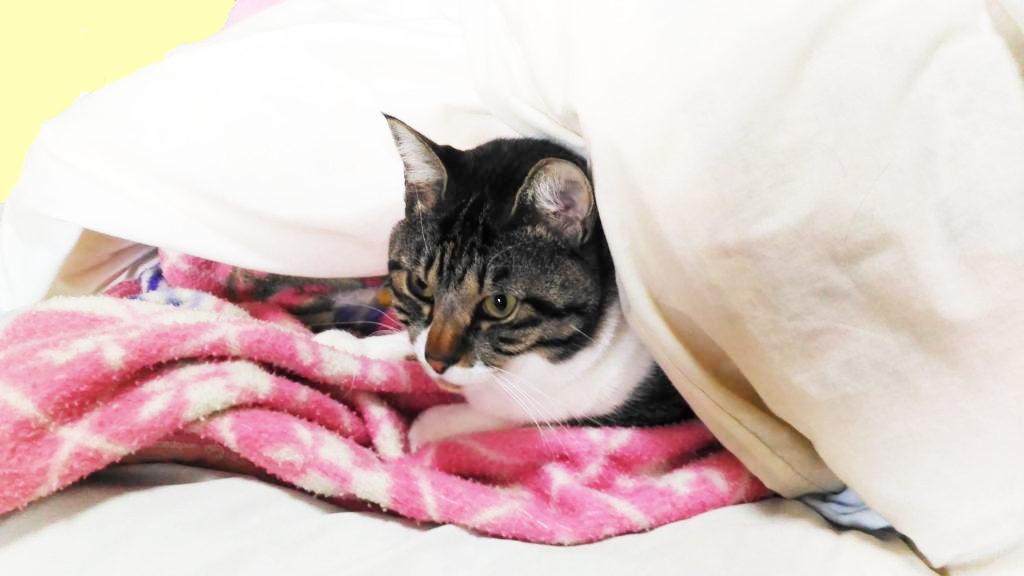 毛布を敷いてぬくぬくする大福丸2