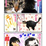第26話:猫がかわいい