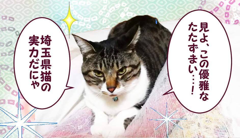 見よこの優雅なたたずまい! 埼玉県猫の実勅だにゃ