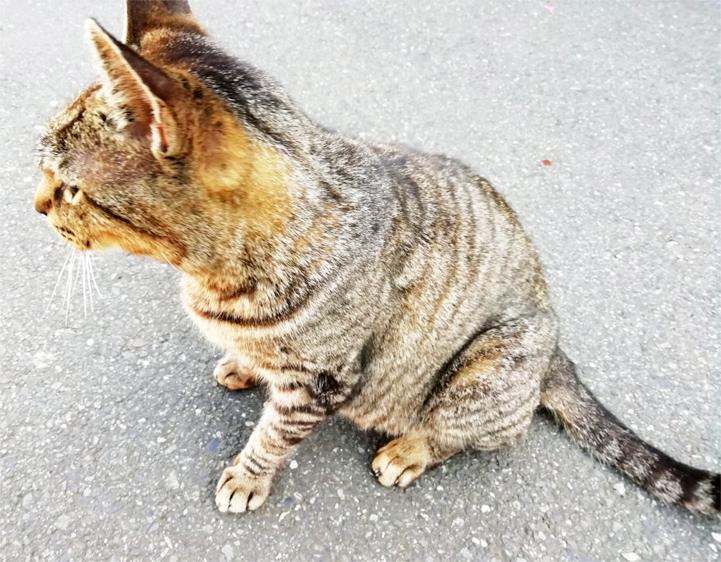 近所の仔猫