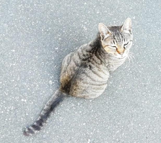 近所の仔猫?