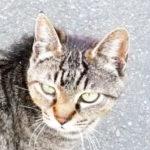 近所の仔猫アイキャッチ