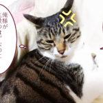 大福丸「このブログ…俺様が」
