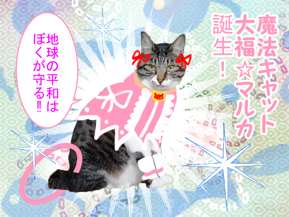 魔法キャット「大福☆マルカ」誕生! 地球の平和はぼくが守る!