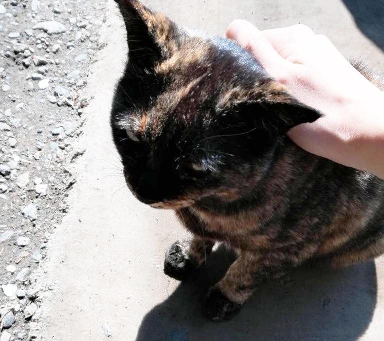 近所にいる黒い猫