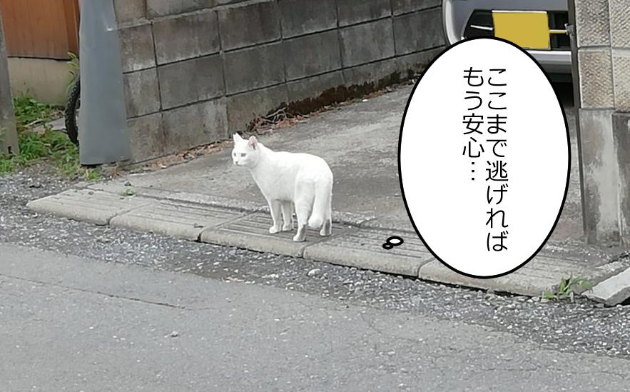 白猫「ここまで逃げればぼう安心…」