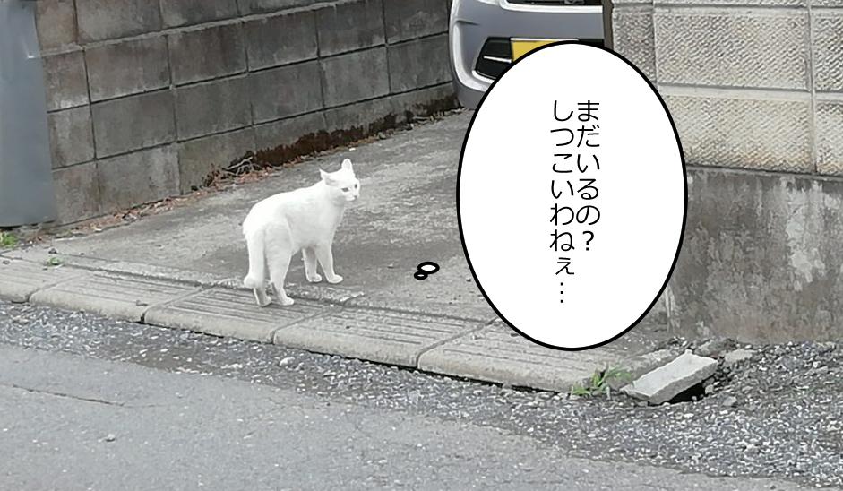 白猫「まだいるの? しつこいわねぇ…」
