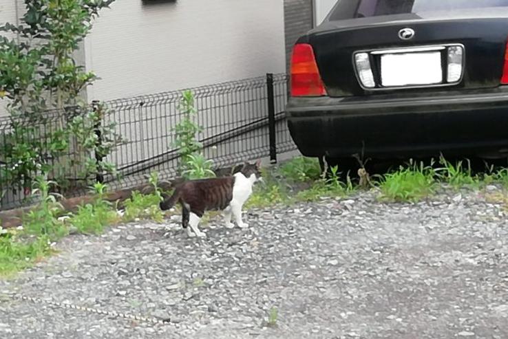 近所の猫2