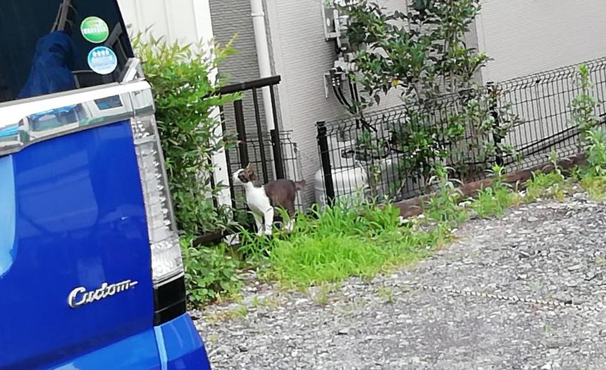 近所の猫4