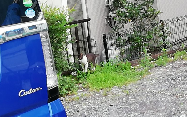 近所の猫5