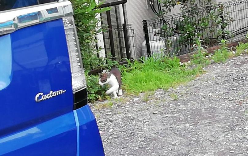 近所の猫6
