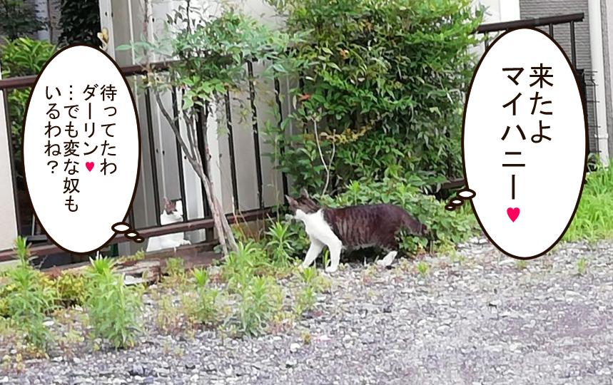近所の猫A「来たよマイハニー」近所の猫B「待ってたわダーリン♥ …でも変なやつもいるわね?」