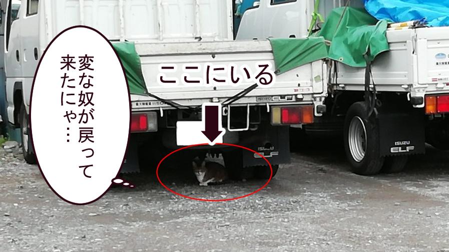 トラックの下に隠れる猫