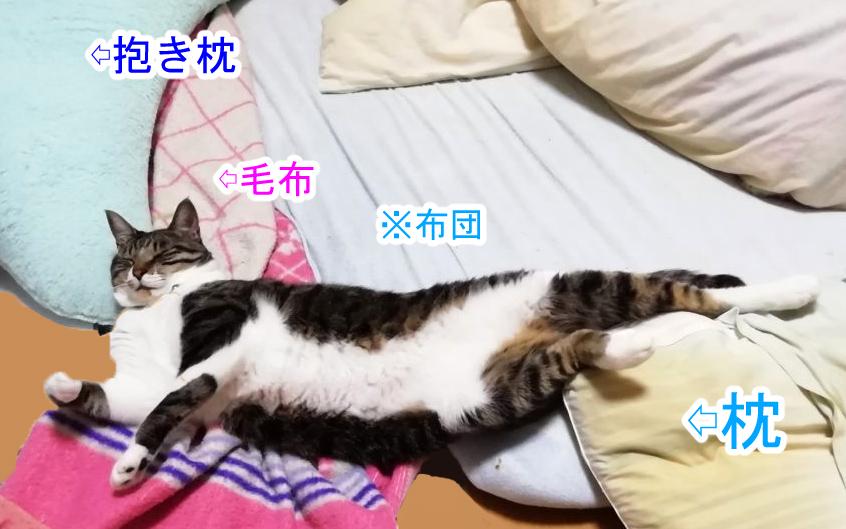 大福丸の変な寝相1