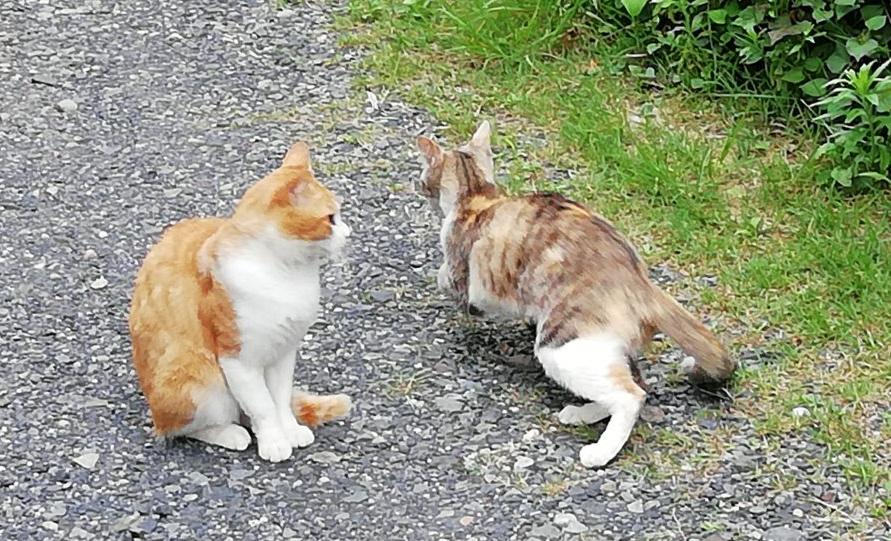 車の音で逃げる猫
