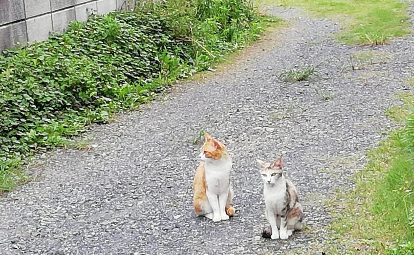 近所の猫×2