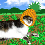 パイナップル畑の大福丸