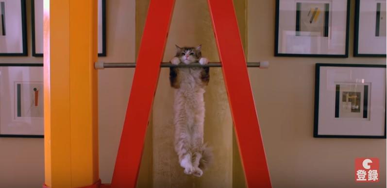 鉄棒する猫