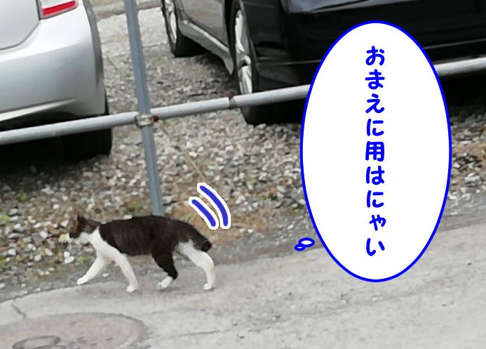 近所の猫「おまえに用はにゃい」