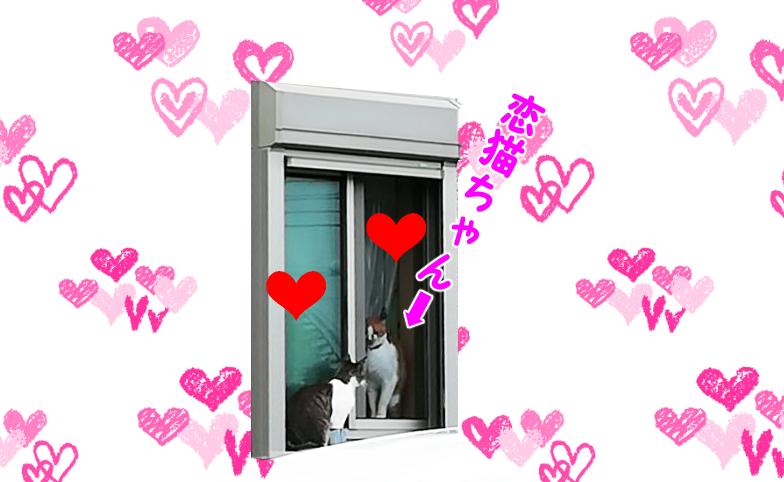 窓越しにデートする猫たち