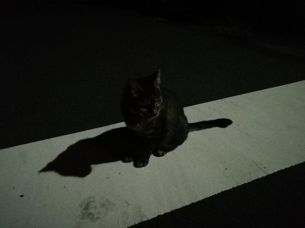 近所の猫写真元の画像