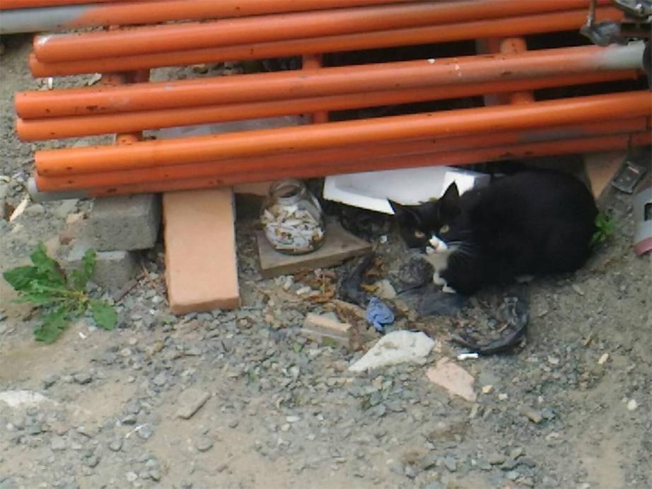 ロシアの猫1