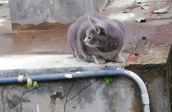 近所の猫2-2