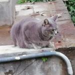 近所の猫2-3
