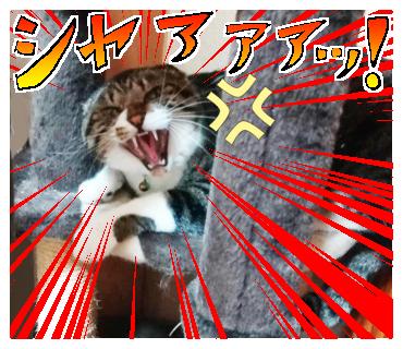 怒った時の顔(イメージ)
