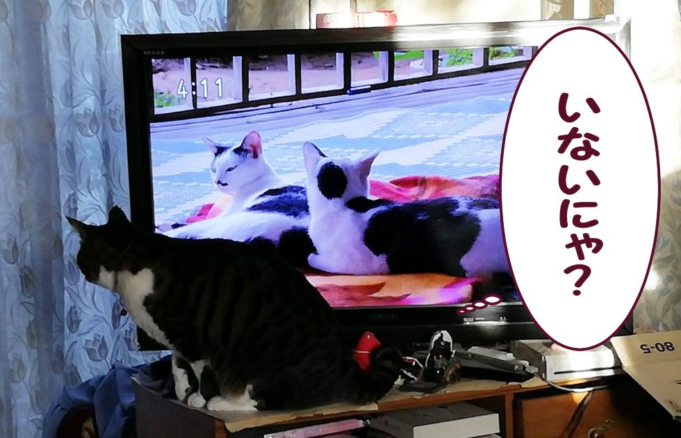 テレビの後ろを覗く大福丸