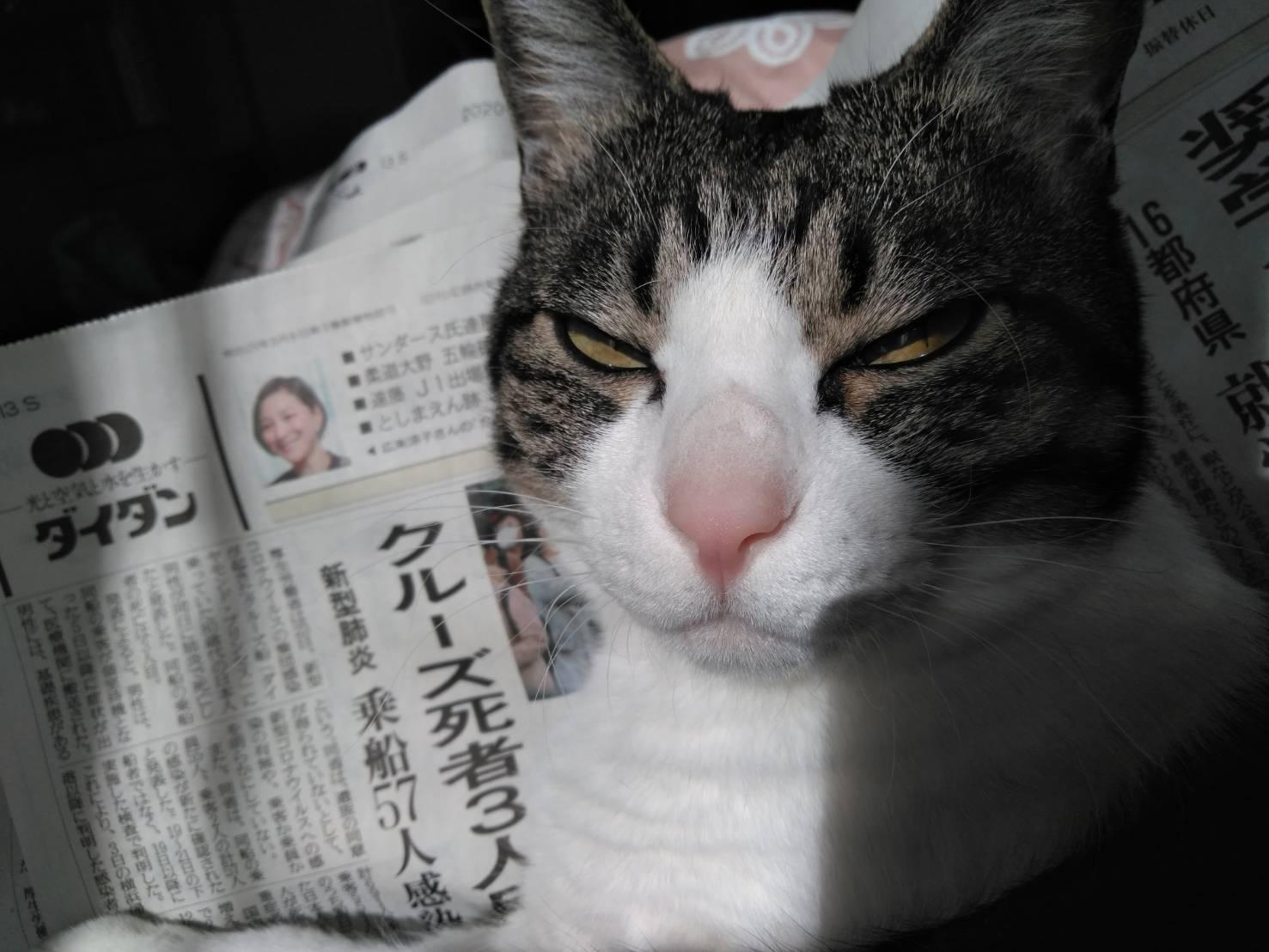 新聞を読んでるミーちゃん?
