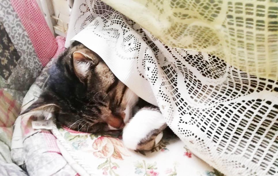気持ち良さそうに寝る大福丸