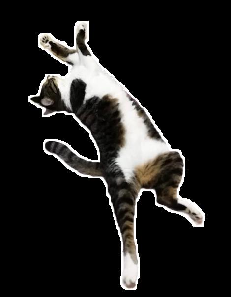 欲望を搾り取る猫