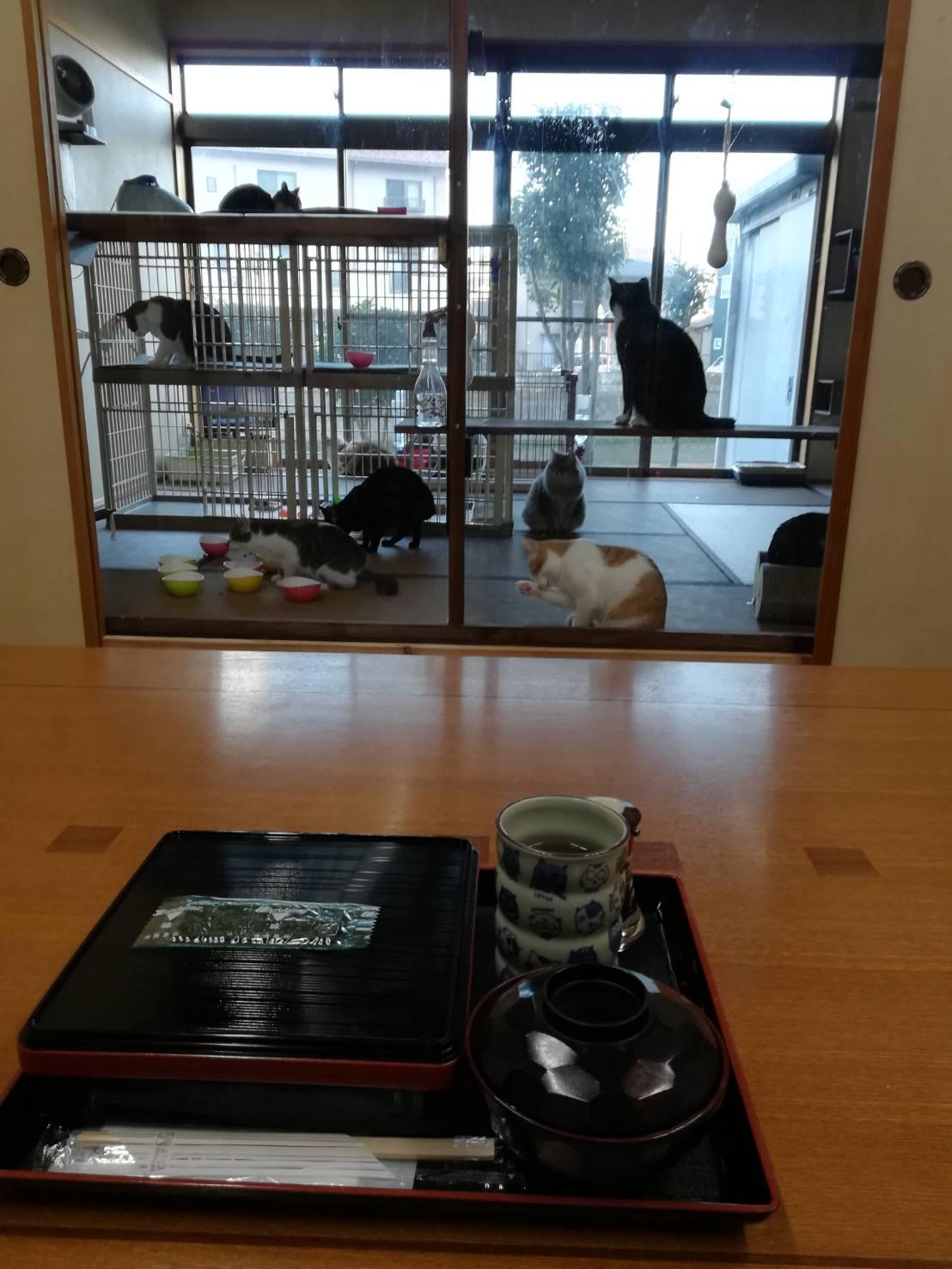 猫がたくさんいる宿の写真