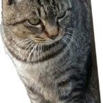 近所の猫1