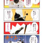 実写猫漫画